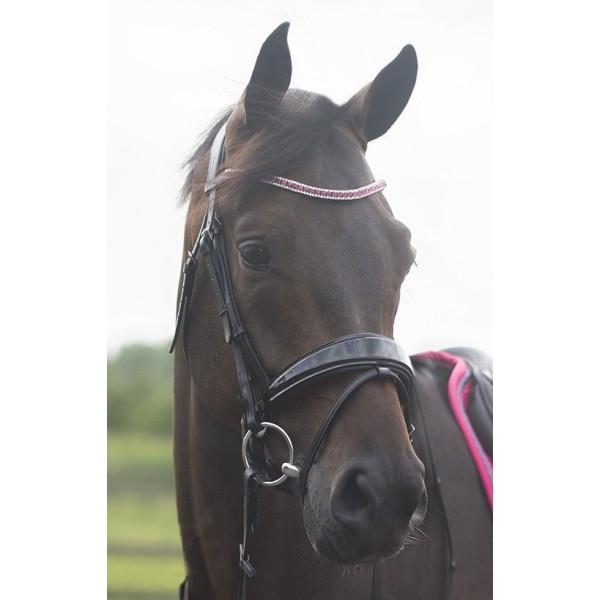 QHP Browband Aster-0